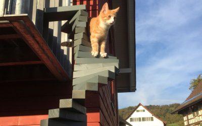 Aus unserer Schreinerei – Wilde Leiter für brave Katze