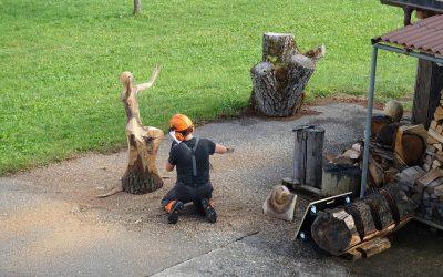 Albisbrunner Nussbäume finden neue Bestimmung(en)